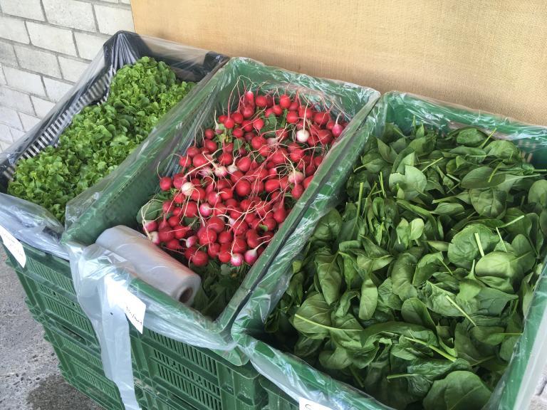 Spinat, Radieschen und Salate aus eigener Produktion